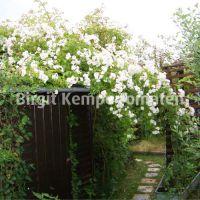 Gartengestaltung_02