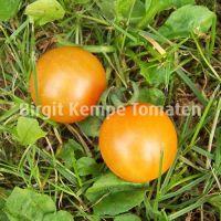 Aprikosenkirschen