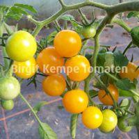 Orange_Berry