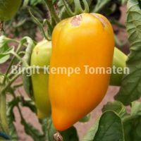 Yellow_Pepper