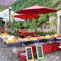 Tomatenverkostung_Hof_Stein