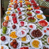 Tomatenvielfalt_1